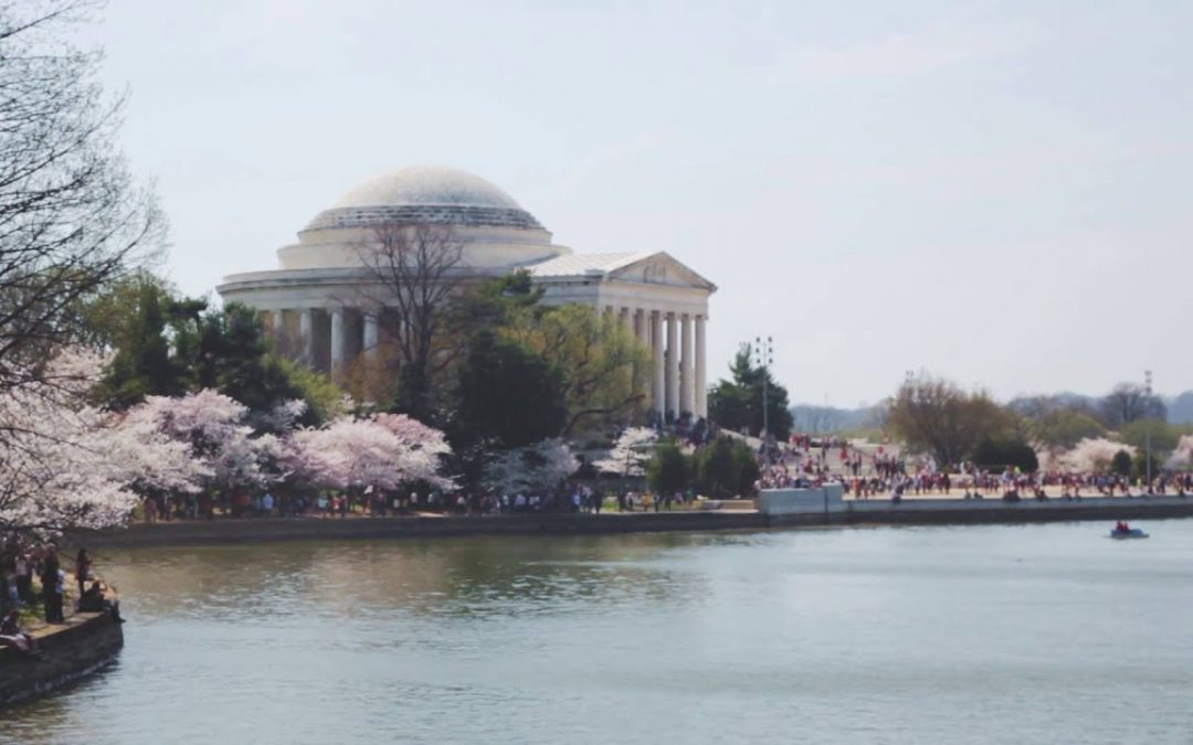 Tidal Basin, DC – Cherry Blossoms